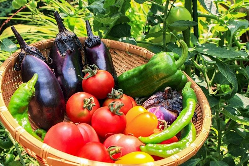 節約と健康食・ダイエットの野菜活用法